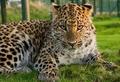 Аватар пользователя Leopard