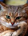 Аватар пользователя Murtchiano